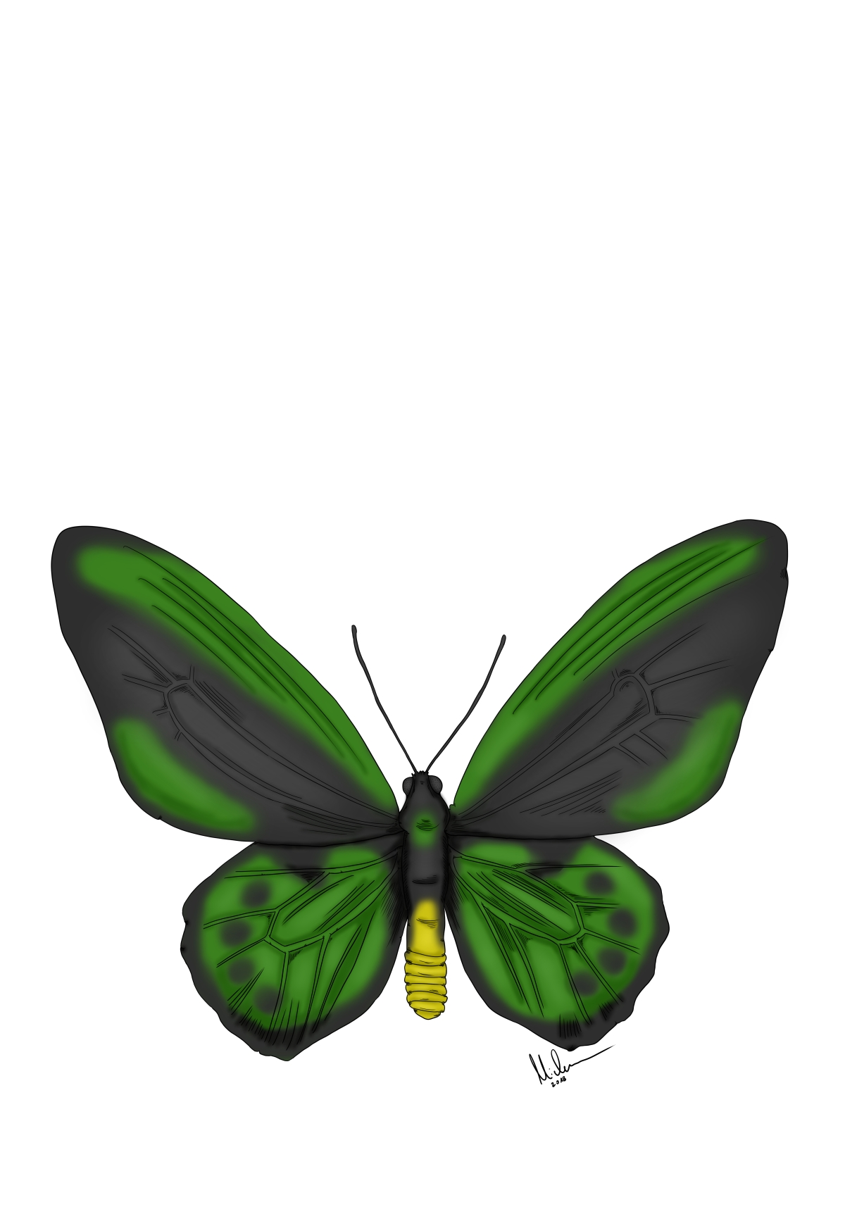 Butterfly green - Copy